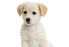 MyMotherLode com Classified Ads - Pets &
